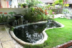 Anthony pools for Koi pond designs south africa